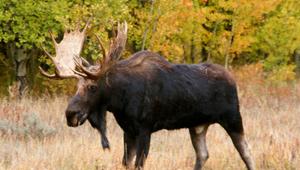 Show 34: Moose Hunt, Hunter Safety, World Benchrest Championships & Moose ID