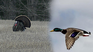 Show 34: Waterfowl & Wild Turkey Tips, Youth Hunting, Atlantic Salmon Update and More