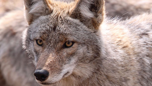 Show 18: CNE Interactive Fishing Exhibit, First Aid for Outdoor Enthusiasts, Proposed Wolf and Coyote Hunting Ban