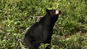Show 28: Successful Bear Hunt Tips and Why Hunting, Trapping and Fishing Heritage is Important